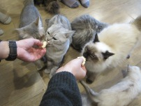 We were quite amused when the Dairylea Triangles came out as a treat for the cats...