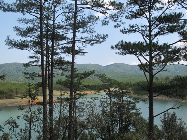 The pine forests